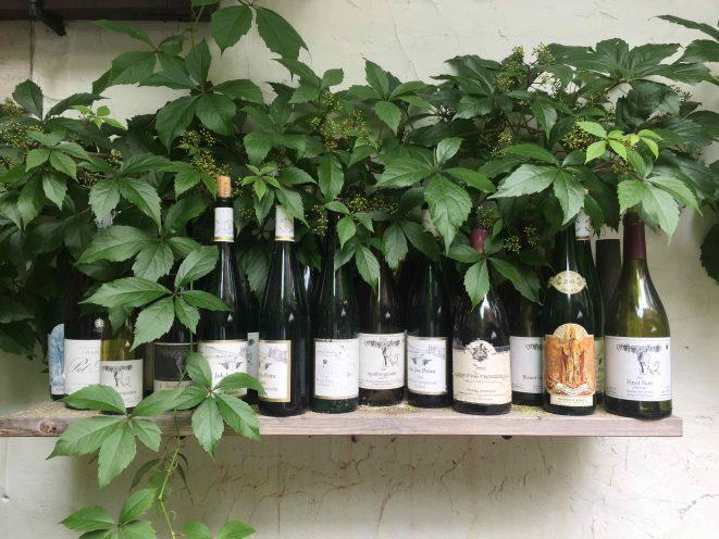 Pfalz Wein Empfehlungen
